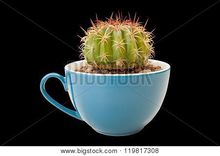 Cactus In Coffee Cup
