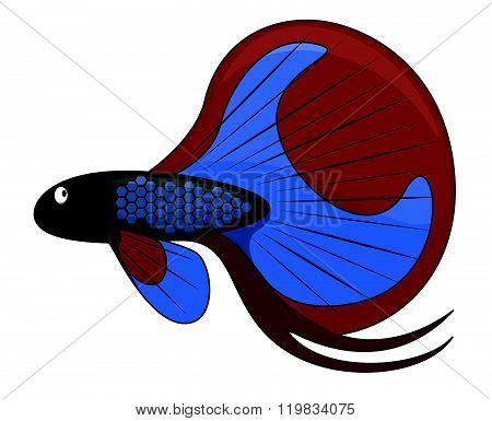betta fish cartoon illustration