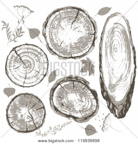 Gray Cross Section Of Tree Trunk And Leaves Set.
