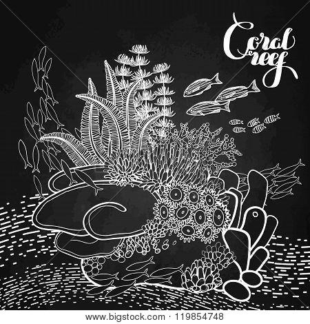 Coral reef design