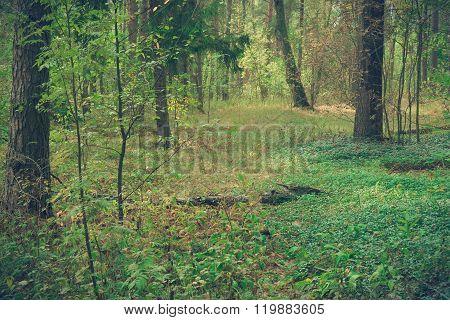 Wild forest covert.