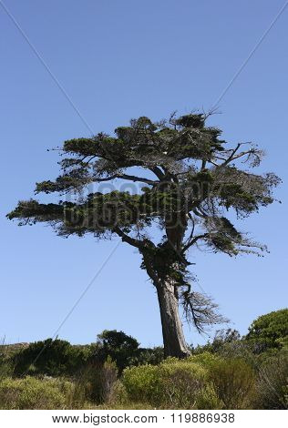Fynbos with tree