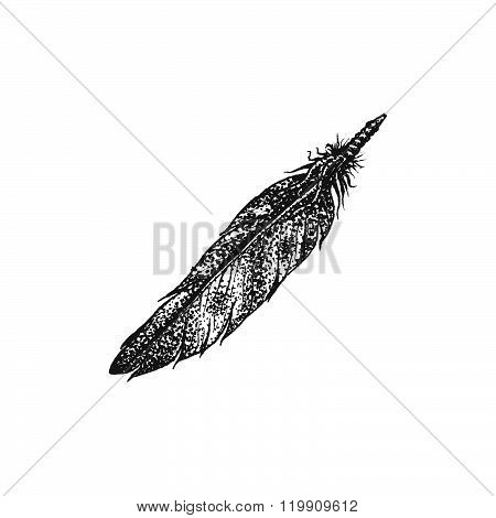 Hand Drawn Indian Feather Vintage Illustration.