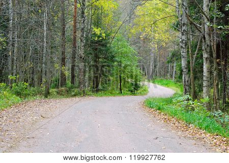 Dirt Road In The Forest.