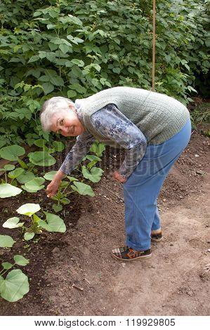 An Elderly Woman Earths Up A Bed With A Pumpkin
