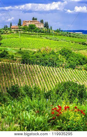 wineyards of Tuscany, Italy