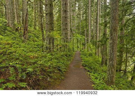 Forest Trail In Silver Falls State Park
