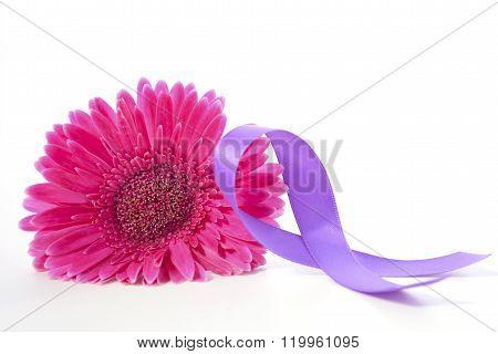 International Womens Day Pink Gerbera