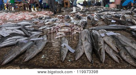 KOH CHANG THAILAND - JANUARY 2 2015: Sell fish barracudas on a street market in Thailand