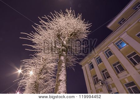 Cold winter night. City landscape. Trees covered with snow.