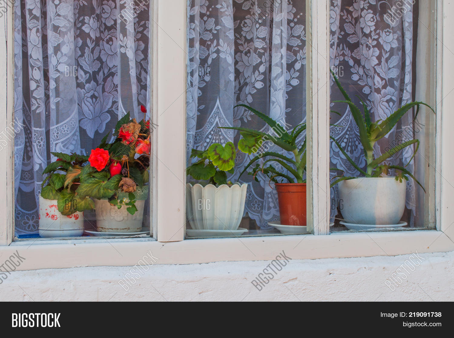 Potted Flowers In Pots Are On The Windowsill Inside The Window In Front Of  The Tulle