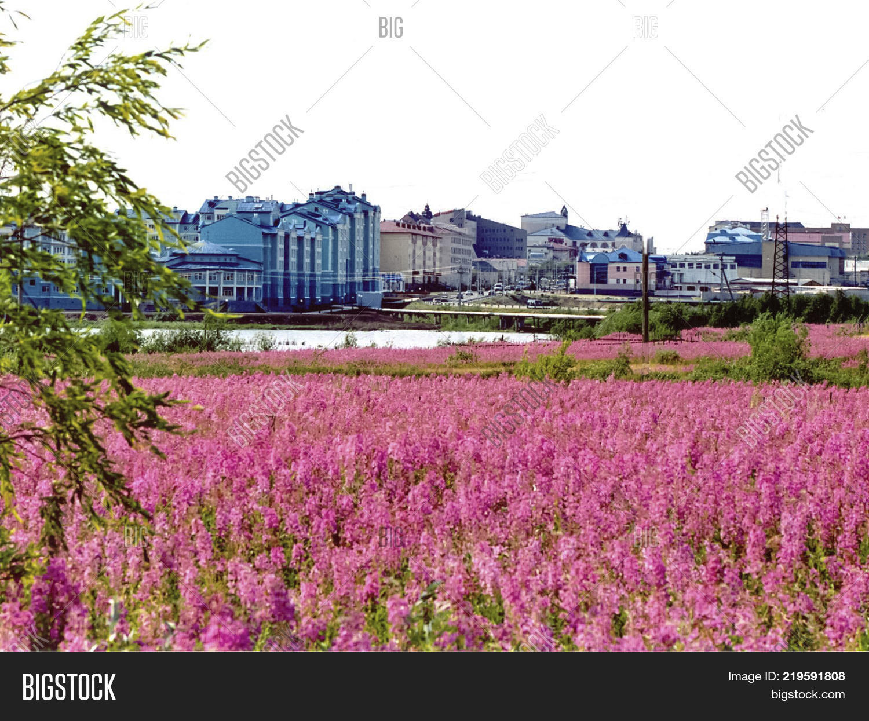 Field Pink Flowers Image Photo Free Trial Bigstock