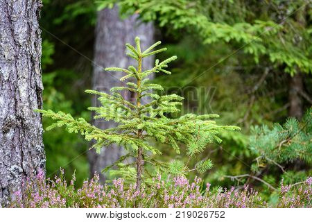 Nature Details In Forest In Summer