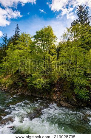 powerful mountain river and forest on a cliff. gorgeous nature scenery in spring time with beautiful sky. power of nature concept