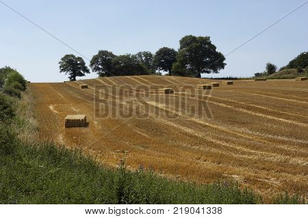 Field Of Barley Stubble With Bails Of Straw