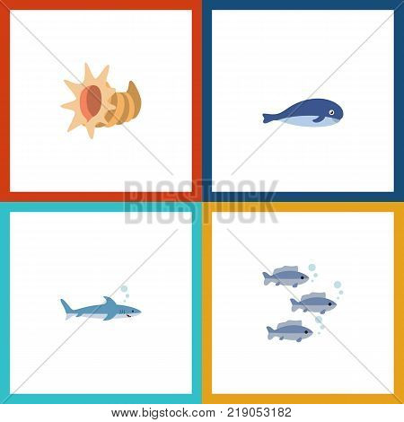 Icon flat nature set of shark, tuna, cachalot and other vector objects. Also includes humpback, cockleshell, shark elements.