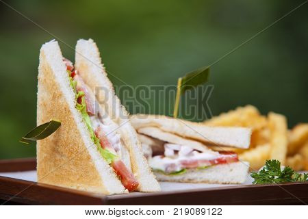 Healthy sandwich made of a fresh salad and tomatoTasty and fresh sandwiches on green background.