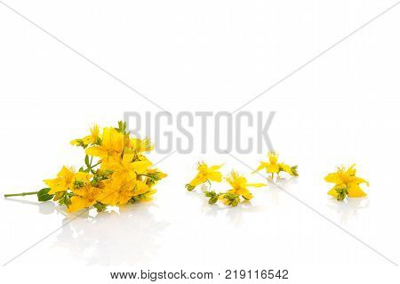 Saint John's wort isolated on white background. Herbal remedy.