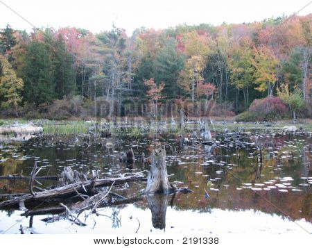 Swamp In Foliage