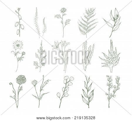 Set of detailed botanical drawings of flowers, ferns and succulent plants isolated on white background. Bundle of floral decorations hand drawn with contour lines. Elegant natural vector illustration