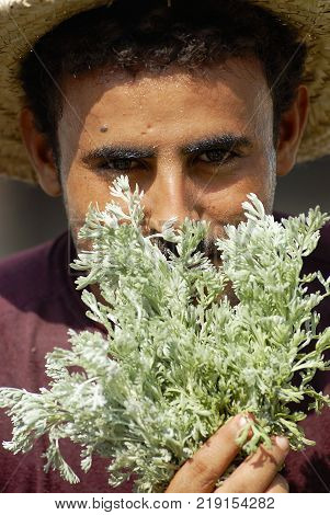SANAA, YEMEN - SEPTEMBER 17, 2006: Portrait of an unidentified yemeni man smelling fresh basil at the market in Sanaa, Yemen. Fresh basil aroma is considered one of the most beautiful in Yemen.