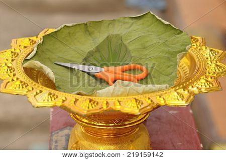 The scissors are placed in gold tray and padded with lotus leaves. Preparing to cut the hair of the ordination ceremony, is a Thai tradition.