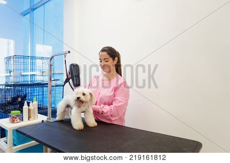 Young woman working in pet shop, brushing and drying dog hair, girl grooming puppy for beauty in store. People, job, profession and animal care.