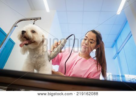 Young woman working in pet shop, trimming dog hair with clipper, girl grooming puppy for beauty in store. People, job, profession and animal care