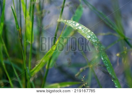 Filtered Green Grass After Rain, Healthy Lifestyle Bio Ecology Concept