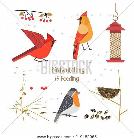 Birdwatching, bird feeding icon set. Red Northern cardinal, robin comic flat cartoon. Birds straw nest, feeder, sunflower seeds. Minimalism simplicity design. Wildlife banner sign. Vector illustration poster