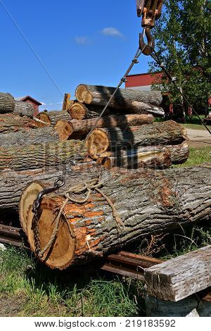 A cable extended from  a boom is attached to a heavy log allowing it to be transported to the sawmill.