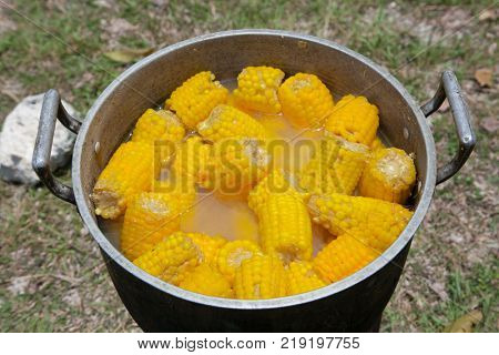 Steamed fresh corn with stick  boiling (sweet maize, vegetables) on the streeet of Cebu city. Philippines.