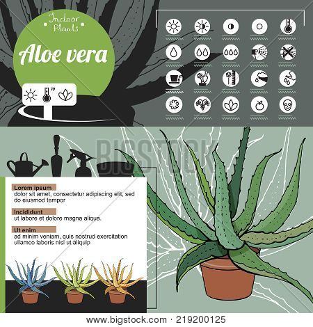 Template For Indoor Plant Aloe Vera. Tipical Flowers Grown At Home And Office.