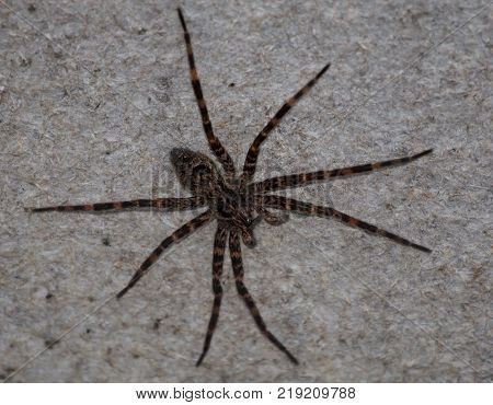 A large spider stands motionless on the side of a door.