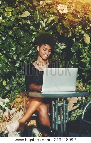 Lovely smiling young African American female freelancer is working on laptop outdoor near hedge; Brazilian cheerful curly girl with netbook in city park or street bar in front of wall of green plants