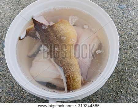 Fresh Fish Guts. Codfish Livers Collect In Grey Plastic Bowl  On  Sandy Ground