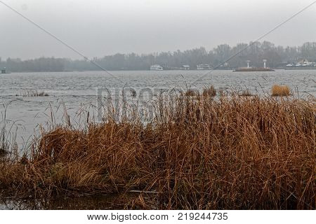Reeds in the rive Swaying Reed background