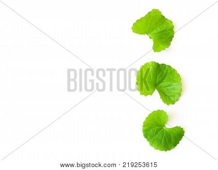 Closeup leaf of Gotu kola Asiatic pennywort Indian pennywort on white background herb and medical concept selective focus poster