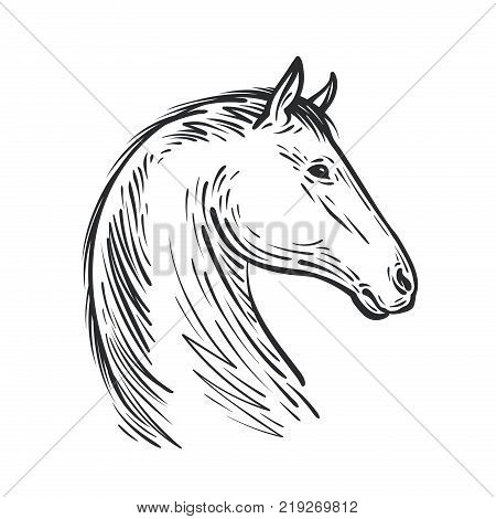 Horse sketch. Farm animal, steed vector illustration isolated on white background