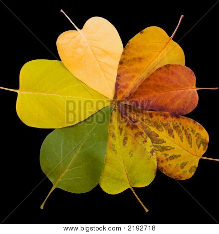 Fall Colors - Leaves