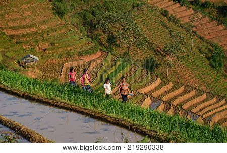 Sapa Vietnam - May 28 2016. Children walking on rice field in Sapa Vietnam. Sapa is a frontier township and capital of Sa Pa District in Lao Cai Province in north-west Vietnam.