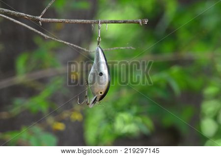 A fishing lure stuck in a tree