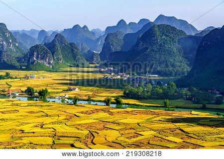 Rice and rice field in Trung Khanh, Cao Bang, Vietnam. Landscape of area Trung Khanh, Cao Bang, Vietnam. poster