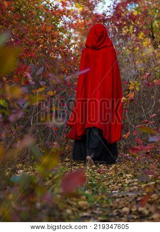 Young beautiful and mysterious woman is Going Away Through the Red Autumn Forest in black Dress and Red Cloak, image of forest elf or witch