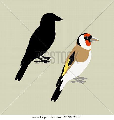 goldfinch bird vector illustration flat style black silhouette set