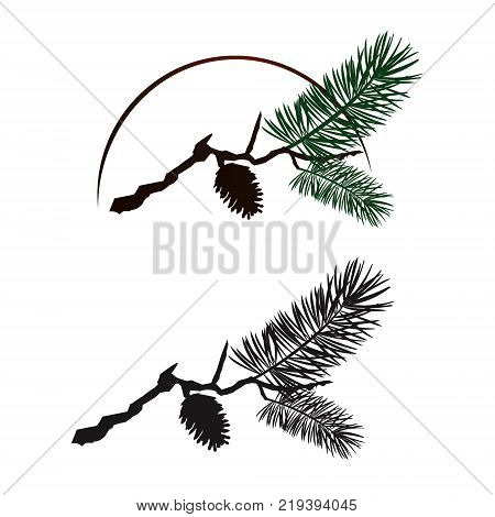 Pine tree branch with fir isolated on white background