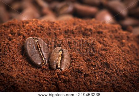 Closeup of a pair of coffee beans on the ground arabic coffee pile.