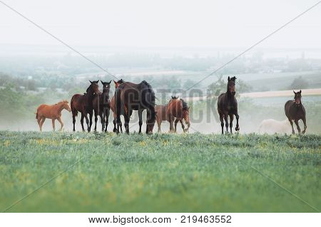 The herd of horses graze in the field against the background of the landscape and the morning haze. Horses at liberty
