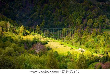spot of light on forested hillside. lovely nature background in springtime