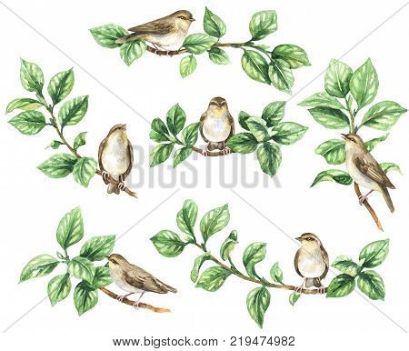 Watercolor painting. Hand drawn animalistic illustration. Aquarelle sketch of forest birds sitting on green tree branches. Songbirds set isolated on white.